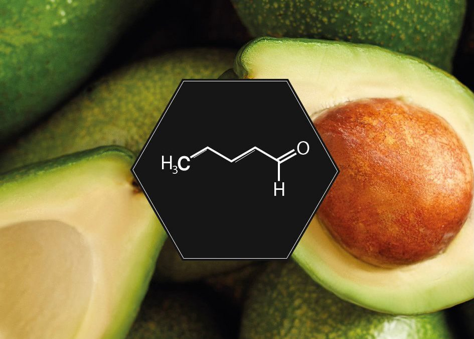 AVOCADO: A FRUIT WITH AN ANISEED HEART